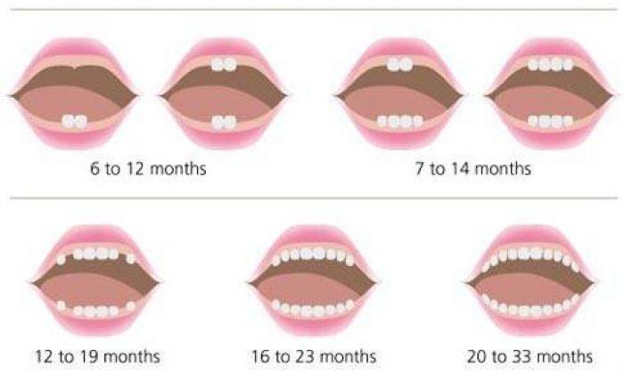 Chiếc răng đầu tiên của con và những thắc mắc phổ biến nhất về việc mọc răng chậm