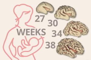 Bioactive Components สำคัญต่อการเจริญเติบโตและสมองลูกรักอย่างไร