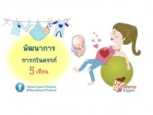 พัฒนาการทารกในครรภ์ 5 เดือน แม่ท้อง 5 เดือนลูกเป็นอย่างไร