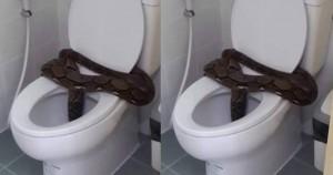 หลอนอีกแล้ว!! งูเหลือมยักษ์โผล่ขึ้นมาจากชักโครก