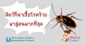 แพทย์ชี้ ซาก แมลงสาบอันตรายกว่าตัวเป็นๆ