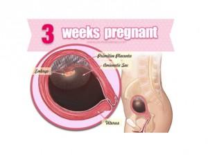 อายุครรภ์ 3 สัปดาห์ ลูกน้อยและคุณแม่เปลี่ยนแปลงอย่างไร