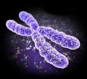 ความหมาย ของ พันธุกรรม (heredity)