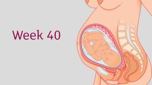 อายุครรภ์ 40 สัปดาห์ ลูกน้อยและคุณแม่เปลี่ยนแปลงอย่างไร?