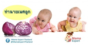 กะหล่ำปลีสีม่วง ทดสอบเพศทารกในครรภ์ได้จริงหรือ?
