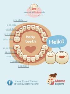 ภาพอินโฟกราฟฟิค ลำดับการขึ้น ของฟันน้ำนมในเด็ก