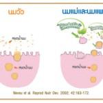 4 สารอาหารจากธรรมชาติ กับ Bioactive Components ที่ดีกับลูกน้อย