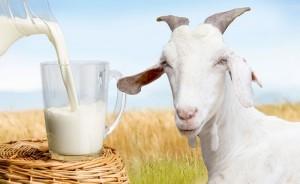 นมแพะคุณค่าดีๆจากธรรมชาติ ... มาฟังคนที่เลี้ยงลูกด้วยนมแพะกันเถอะ?