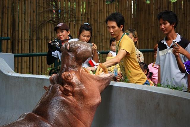 zoo_kaodin